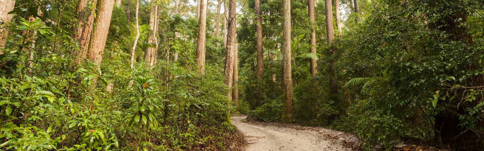 Fraser Island Rainforests